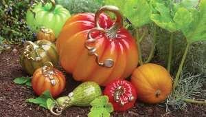 pumpkins_garden